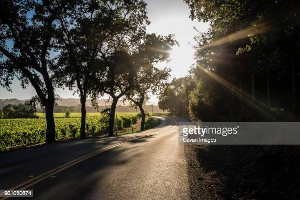 empty road amidst trees against sky during sunny day - sonoma county stock pictures, royalty-free photos & images