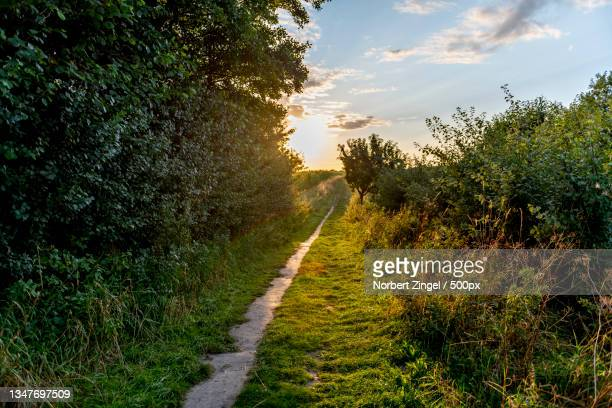 empty road amidst trees against sky,nieby,germany - norbert zingel stock-fotos und bilder