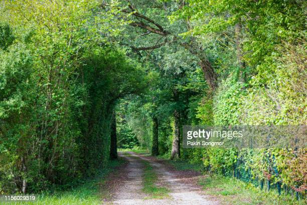 empty road amidst trees at montagne de reims countryside. - marne stock pictures, royalty-free photos & images
