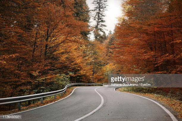 empty road amidst trees during autumn - adriana duduleanu stock photos and pictures