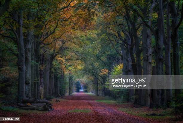 empty road amidst trees during autumn - hilversum foto e immagini stock