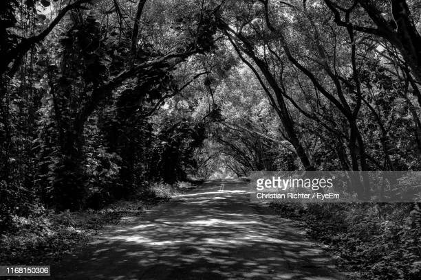"empty road amidst trees in forest - ""christian richter"" stock pictures, royalty-free photos & images"