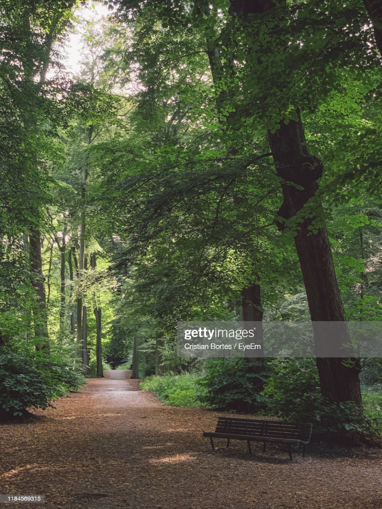 Empty Road Amidst Trees In Forest : Stock Photo