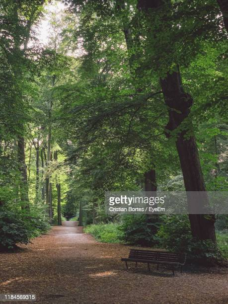 empty road amidst trees in forest - bortes stock photos and pictures