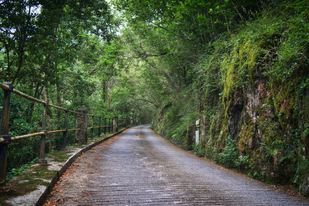 Empty road amidst trees in forest,A Capela,Spain