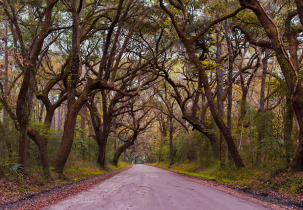 Empty road amidst trees in forest,Edisto Island,South Carolina,United States,USA