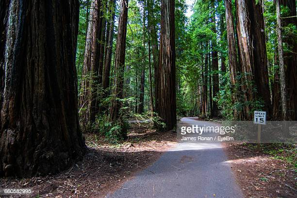 Empty Road Amidst Trees In Redwood National And State Parks