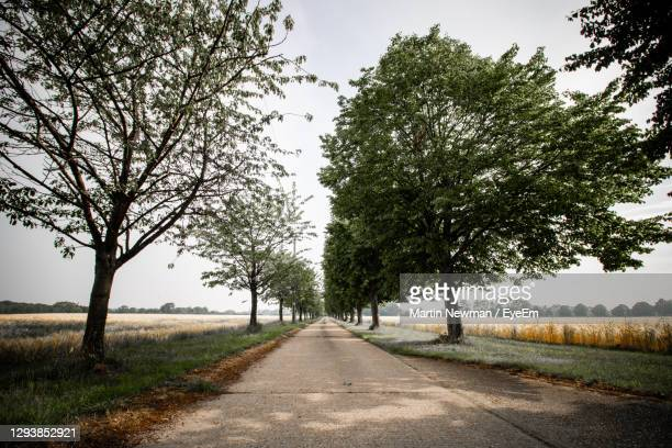 empty road amidst trees on field against sky - diminishing perspective stock pictures, royalty-free photos & images