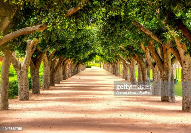 empty road amidst trees - casablanca stock pictures, royalty-free photos & images