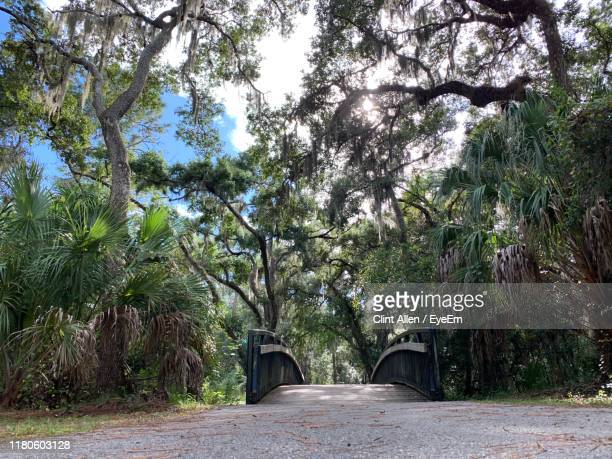 empty road amidst trees - bradenton stock pictures, royalty-free photos & images