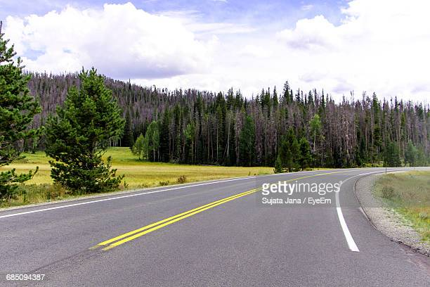 Empty Road By Trees