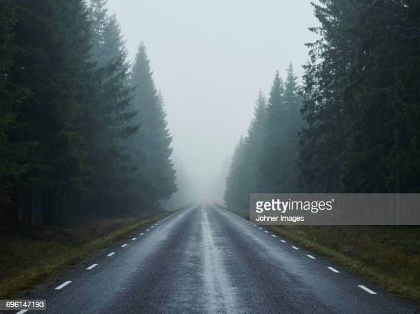 Empty road in forest