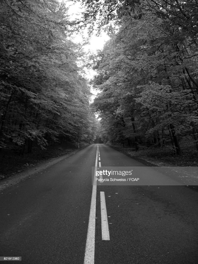 Empty road in forest : Stock Photo