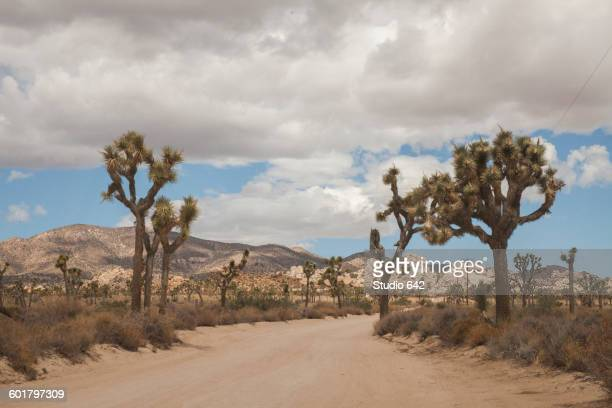 Empty road in rural desert landscape