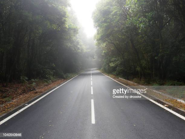 empty road in the forest and mist in garajonay national park - estrada imagens e fotografias de stock