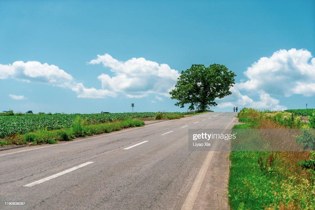 Empty Road : Stock Photo