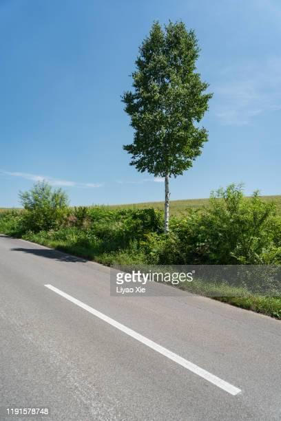 empty road - 境界線 ストックフォトと画像