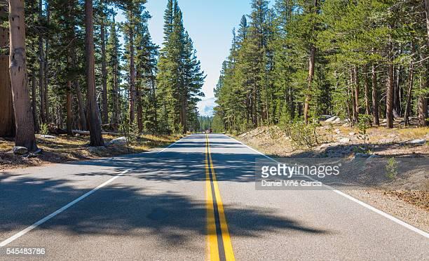 Empty road running through Yosemite national park in Northern California, United States, North America.