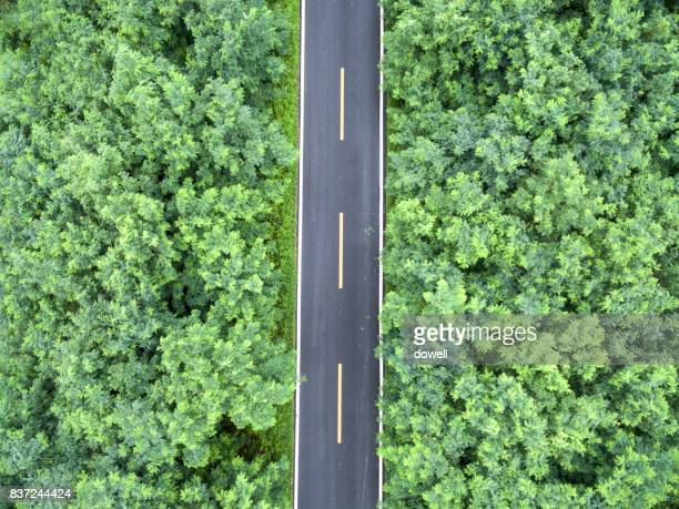 empty road though green forests from top view