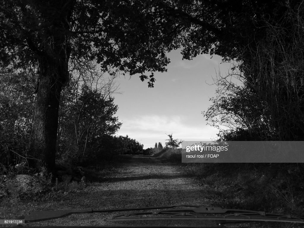 Empty road through forest : Stock Photo