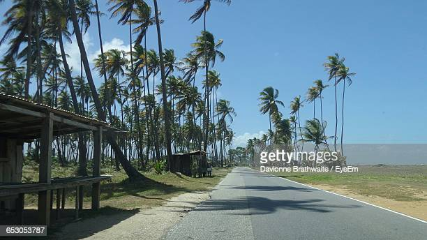 empty road with trees in background - trinidad and tobago stock pictures, royalty-free photos & images