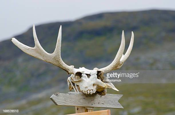 Empty sign post with moose skull and antlers