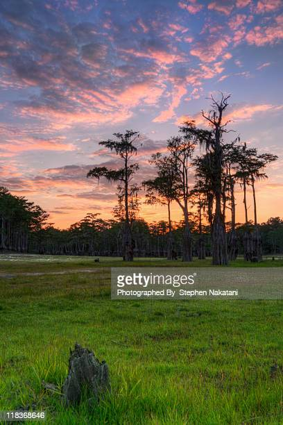 empty sinkhole lake with cypress during sunset - tallahassee stock pictures, royalty-free photos & images