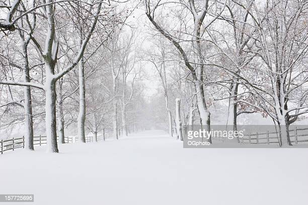 empty snow covered road - ogphoto stock pictures, royalty-free photos & images
