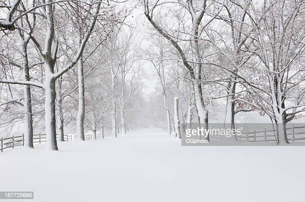 vuota strada coperta di neve - ogphoto foto e immagini stock