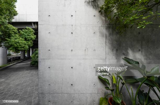 empty studio background, ornamental plants - ornamental plant stock pictures, royalty-free photos & images