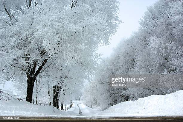 Empty tree lined road in snow, Minnesota, America, USA