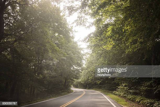 empty tree lined rural road - heshphoto stock pictures, royalty-free photos & images