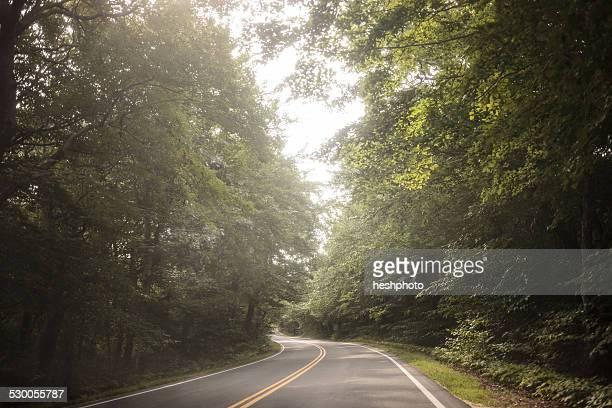 empty tree lined rural road - heshphoto ストックフォトと画像