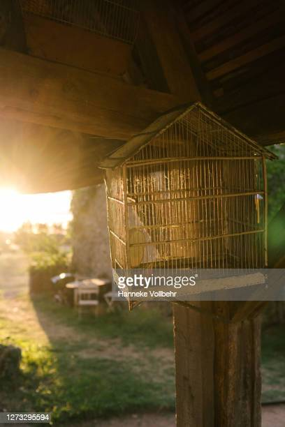 empty vintage birdcage with sunset backlight - kamperen stock pictures, royalty-free photos & images