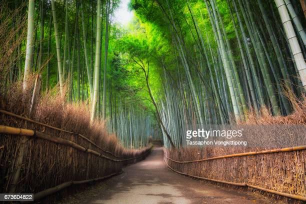 empty walking path in bamboo grove forest in Arashiyama Kyoto, Japan