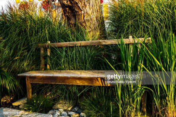 Empty Wooden Bench Against Tree Trunk Amidst Grass At Park