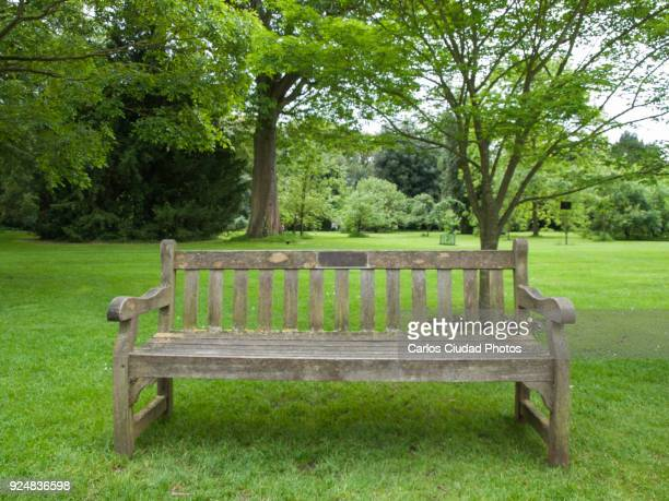 Empty wooden bench in a tranquil public park of London
