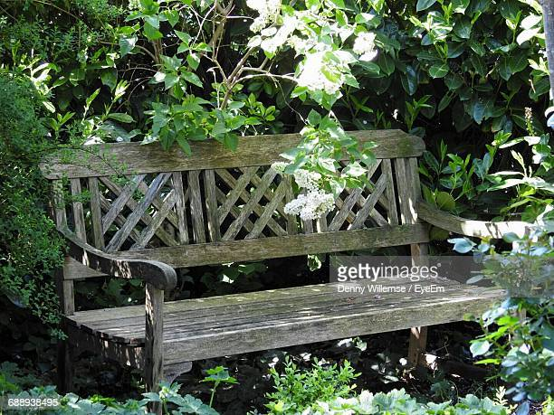 Empty Wooden Bench Surrounded By Plants At Park