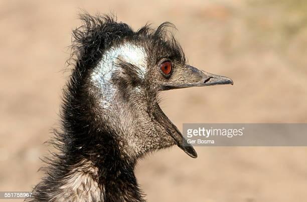 Emu All Emotional