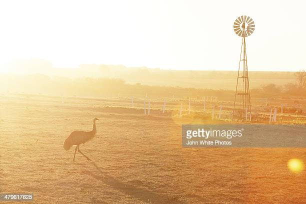 Emu and windmill in Australian outback.