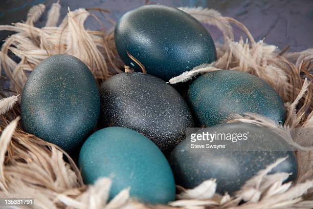 emu eggs - emu stock pictures, royalty-free photos & images