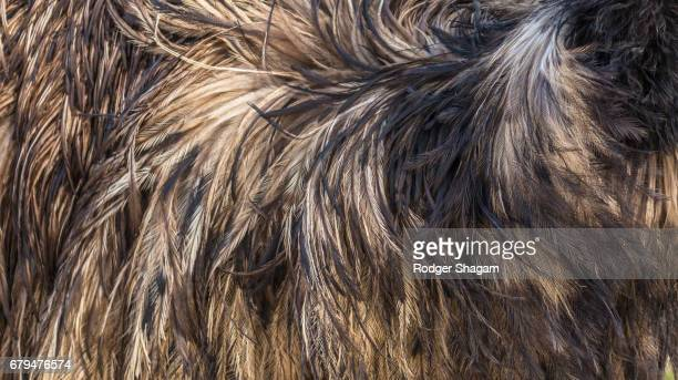 Emu feathers - close-up