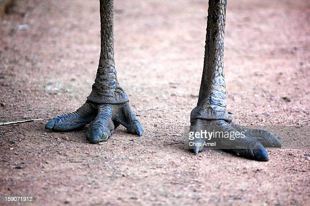 emu feet - emu stock pictures, royalty-free photos & images