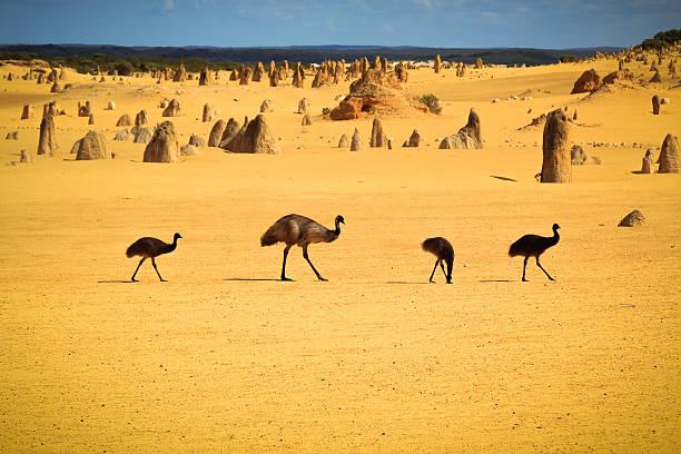 Emus In Nambung National Park Wall Art