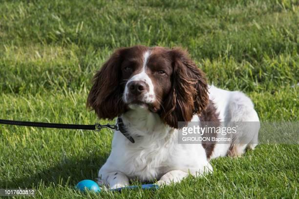 En mai 2018 rencontre avec l'inspecteur de police suédois Johan ESBORJNSSON et son chien Ben un springler anglais de 8 ans qui lors d'une mission au...