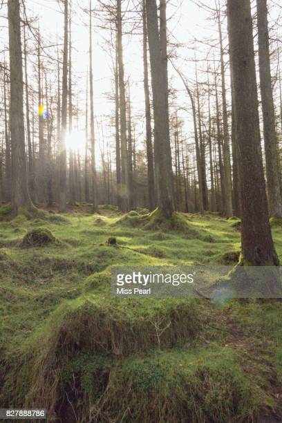 Enchanted forest with moss floor