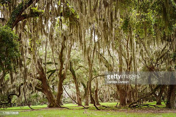 enchanted place - saint simon's island stock pictures, royalty-free photos & images