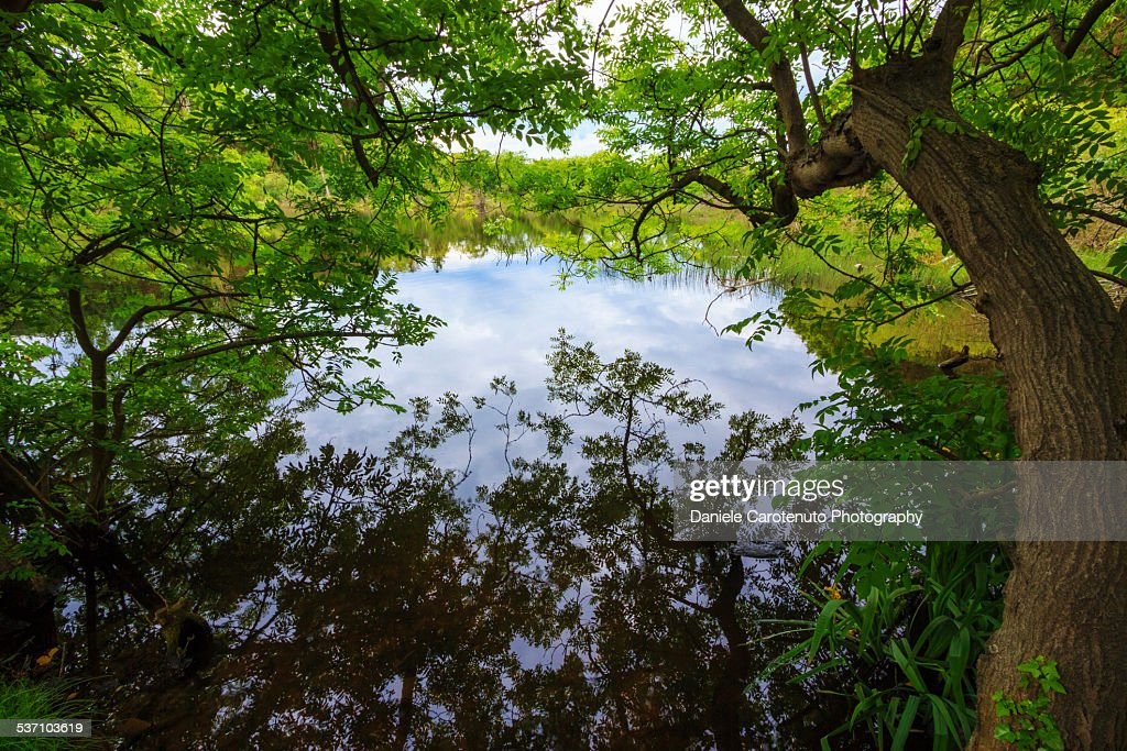 Enchanted pond : Stock Photo