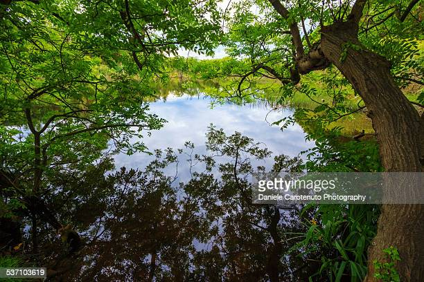 enchanted pond - daniele carotenuto stock pictures, royalty-free photos & images