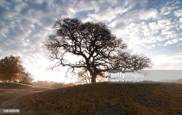 enchanted tree in the foothills - santa clara county california stock pictures, royalty-free photos & images